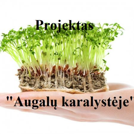 """PROJEKTAS DARŽELYJE ,,AUGALŲ KARALYSTĖJE"""""""
